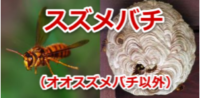 スズメバチの種類