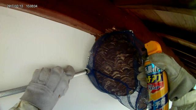 コガタスズメバチの巣画像