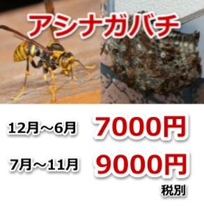 アシナガバチ駆除料金画像