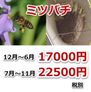 東近江市のミツバチ駆除料金