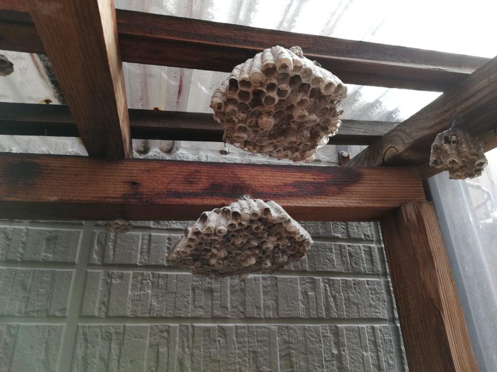 近江八幡市アシナガバチの巣駆除