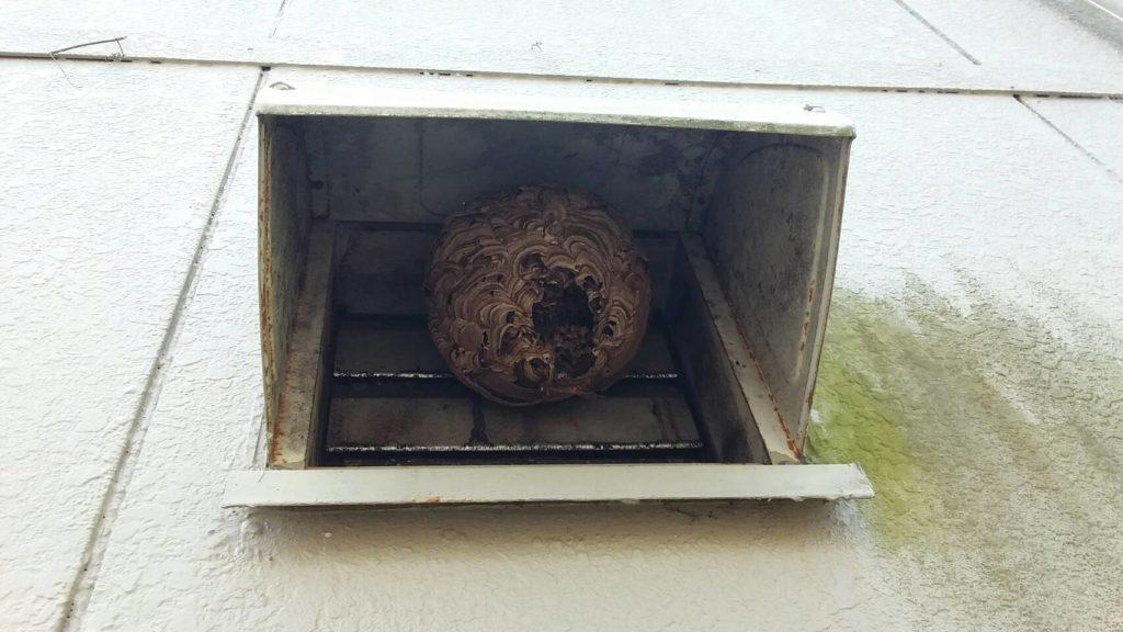 大津市南小松の朽ちたキイロスズメバチの巣