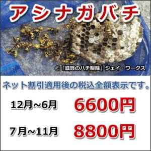 滋賀県安土町のアシナガバチ駆除料金