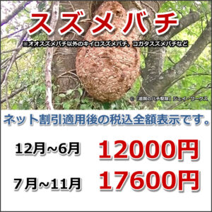 滋賀県信楽町のスズメバチ駆除料金