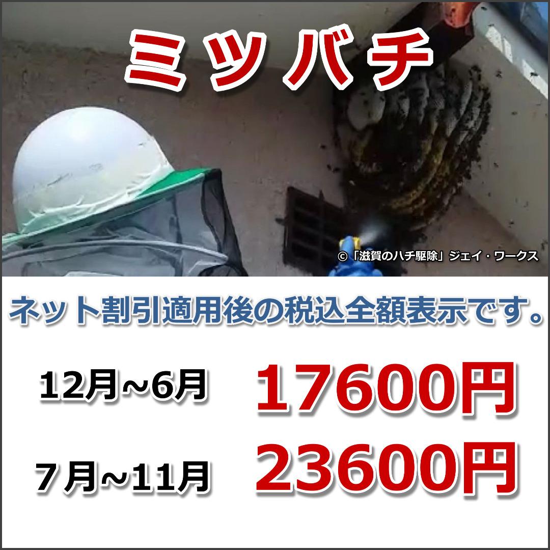 滋賀県信楽町のミツバチ駆除料金