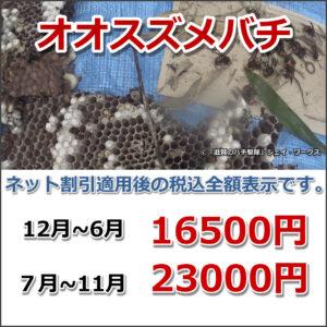 滋賀県安土町の大スズメバチ駆除料金