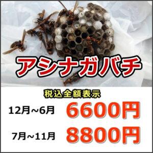 滋賀県アシナガバチ駆除料金